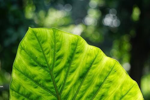 Green leaf with dew, symbolizing healthy spiritual growth